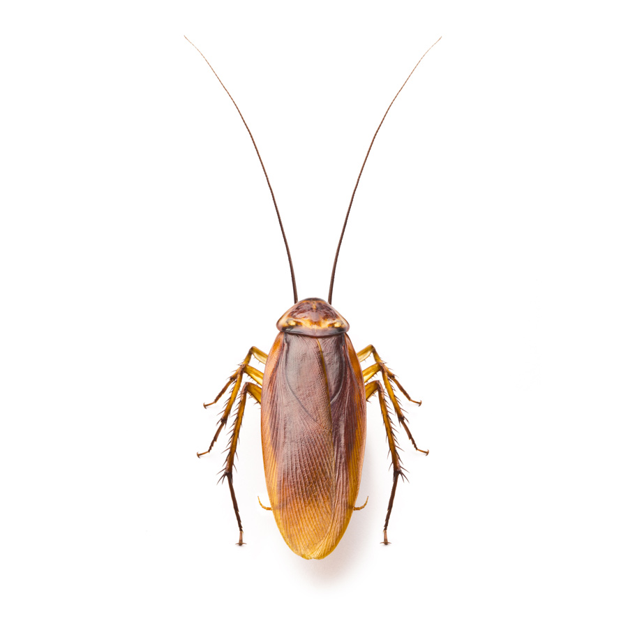 Insect Identification - The Pest Control Authority